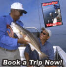 trout, redfish, trout fishing, redfishing, bay fishing, texas, texas coast, fishing guide, baffin bay, land cut, monster trout, flats, wade fishing, center console, bill sheka, keith warren, abu garcia, berkley fishing, mercury, outboards, guided trip, corpus christi, saltwater, costal, speckled trout, specks, specs, shrimp, sea trout