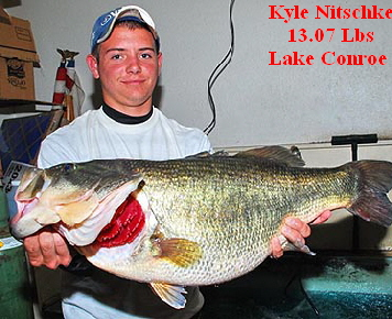 Willi nitschke bilder news infos aus dem web for Lake conroe bass fishing