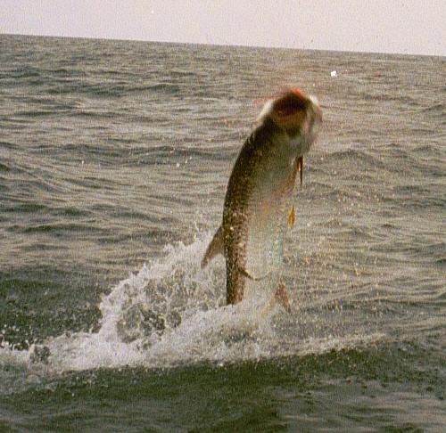 Baytown fishing trips houston charter tx bay fishing for 13 fishing tx