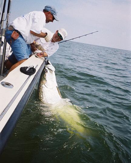 Louisiana trout fishing south shore harbour fishing guide for Shark fishing from shore