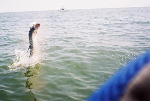 League city off shore fishing seabrook tarpons kemah blue for Houston fishing charters